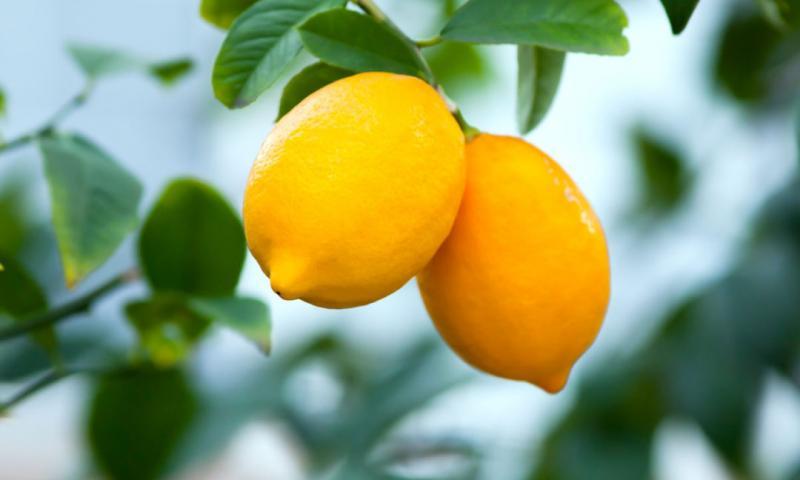 pot mandarine în varicoză